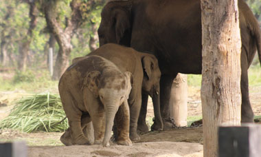 Elephant Breeding Center Visit